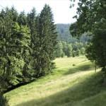 Impressionen Simonswäldertal